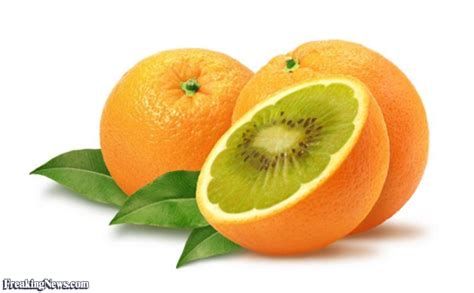 orange hybrid fruit hybrid fruits and vegetables pictures gallery freaking news