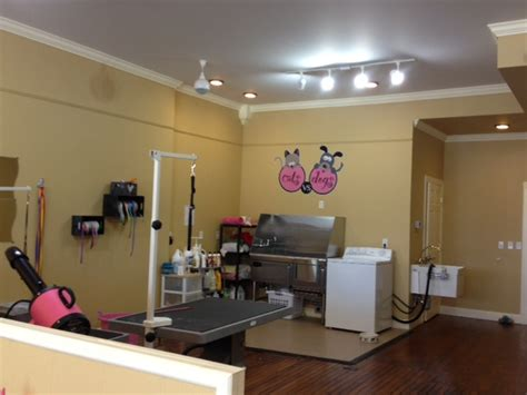 pets  top dog treatment   cat  dog grooming