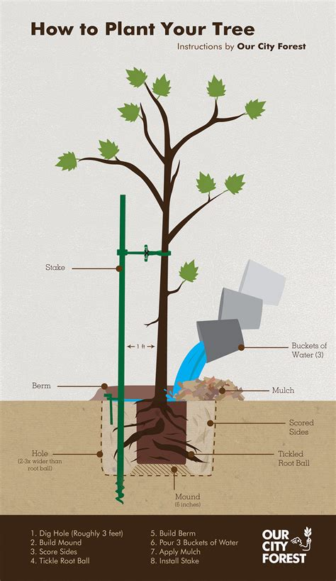 How To Plant Your Tree Infographic On Behance