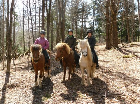 icelandic horse horses ride fun smiles toelt muffy quietly karen barbara woods standing taking four feet story