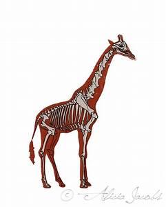 Giraffe Skeleton Diagram Screenprint
