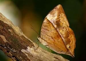 Rare Animals: Top 10 Rarest Butterflies in the World ...