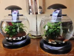 poisson aquarium boule aquarium boule