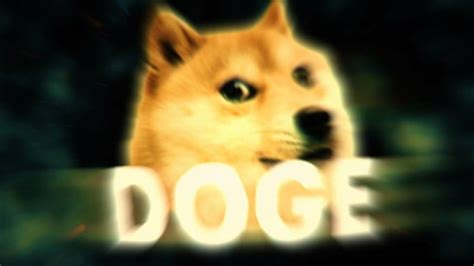 1080 X 1080 Doge This Doge Taco 25 Adorable Dogs Dressed