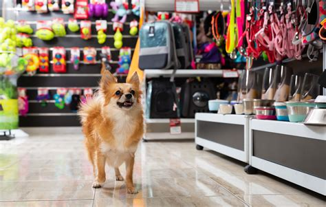 We publish unbiased product reviews; Pet Shops Insurance - from Mobi