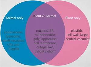 Differences And Similarities Between Plant And Animal