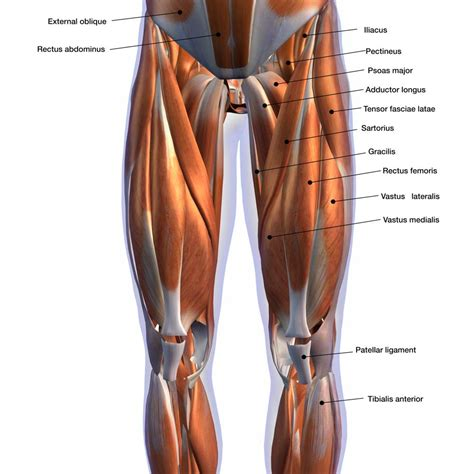 The leg muscles diagram, will point out if the issue is with any tissue or with the bone. Vastus Medialis Strengthening For Superior Knee Health ...
