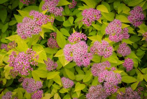 Unique Shrubs To Attract Butterflies To Your Garden