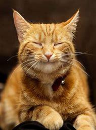 Kitty Cat Happy Face