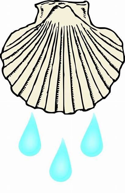 Baptism Shell Water Clipart Lds Clip Openclipart