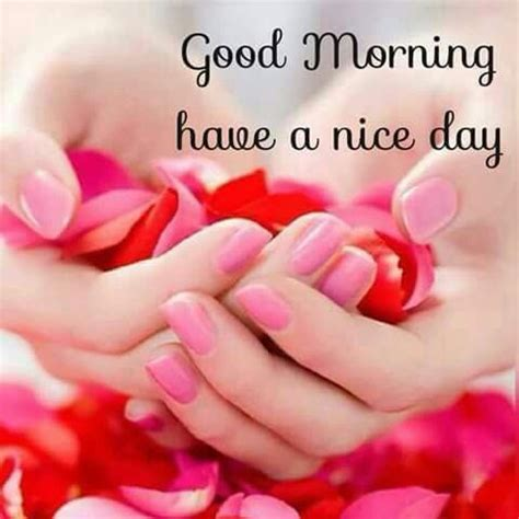 good morning hope    nice day pictures
