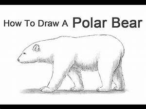 Bear Easy Drawing