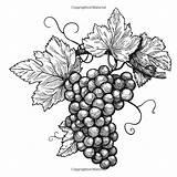 Vines Vineyard Vins Biologique Pngegg Gograph Pngwave Mesto sketch template