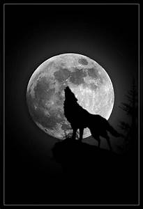 January's Full Moon: Throw me to the Wolves & I'll Come ...