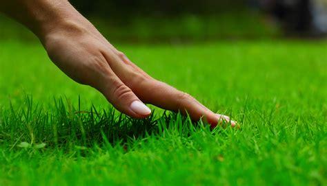 Lawn Fertilization Tips And Proper Procedure
