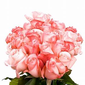 Globalrose Fresh Light Pink Color Roses (250 Stems)-livia ...
