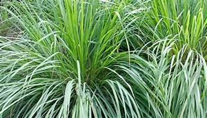 Zimmer Geruch Entfernen : pflanzen im schlafzimmer die top 6 f r gesunde nachtruhe ~ Markanthonyermac.com Haus und Dekorationen