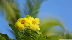 Hawaiian Flowers Wallpapers - Wallpaper Cave