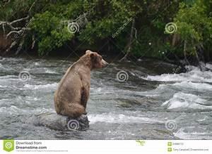 Large Brown Bear Sitting On Rock Stock Photo - Image: 24686712