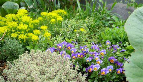 Geplantes Chaos Wilder Garten Im Goldenen Schnitt
