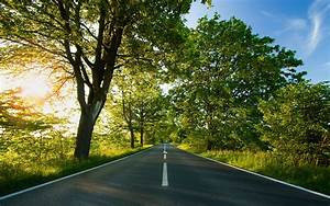 Photography, Nature, Plants, Trees, Landscape, Road, Sun, Summer, Wallpapers, Hd, Desktop, And