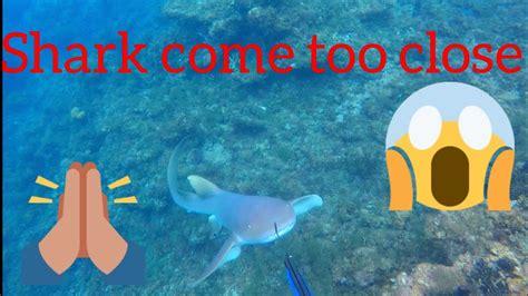 eel moray grouper attack shark