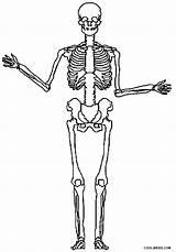 Skeleton Coloring Pages Printable Cool2bkids Bones Skeletons Halloween Skull Sheets Bone Visit sketch template