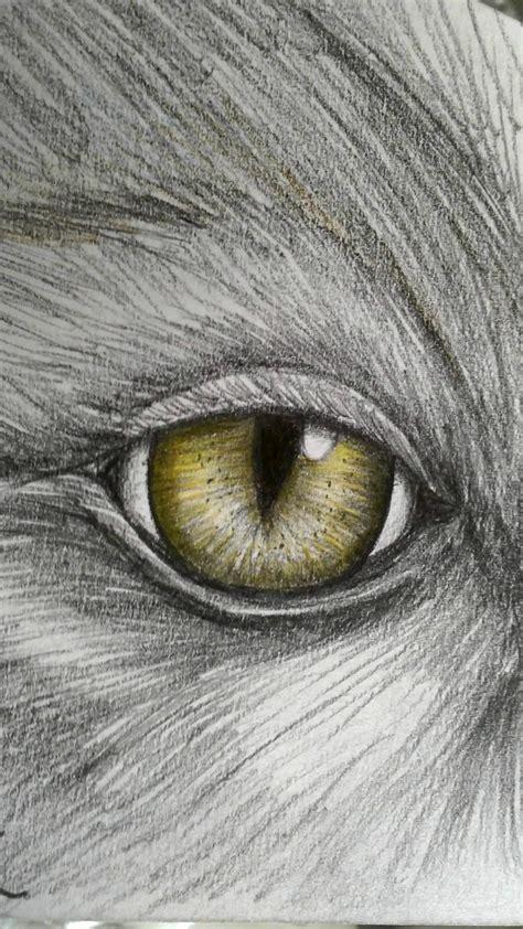animal eye  subhy  deviantart
