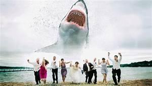 Funny Shark Attack