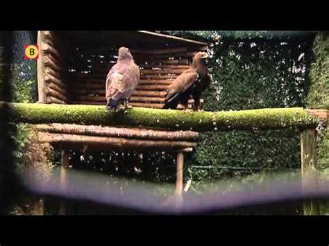 Jacht In Beslag Genomen by De Jacht Op Roofvogels In Friesland Doovi