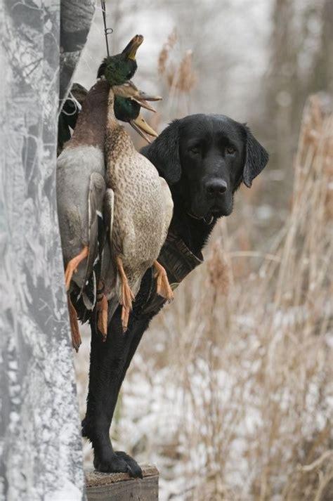 bird hunt images  pinterest hunting hunting