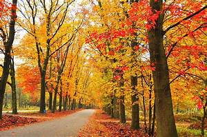 Autumn, Fall, Landscape, Nature, Tree, Forest, Leaf, Leaves, Wallpapers, Hd, Desktop, And, Mobile