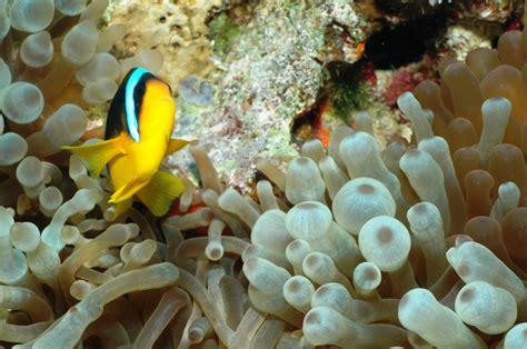 Deepsea: ดอกไม้ทะเล