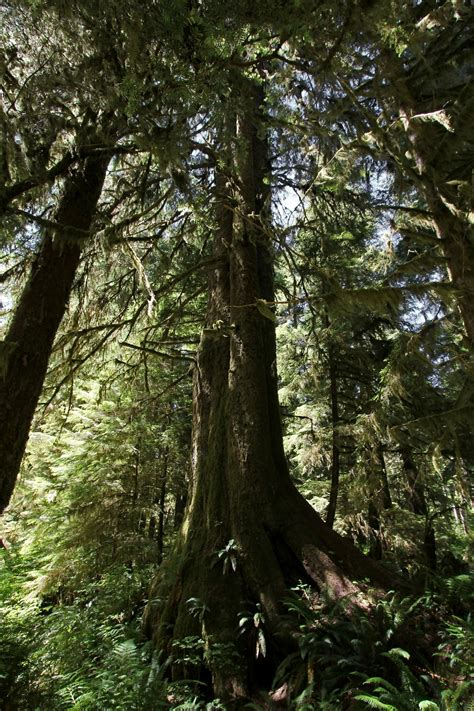 Old Growth Rainforestwhat Still Stands Is More Valuable