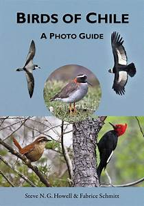 Review  Birds Of Chile  A Photo Guide