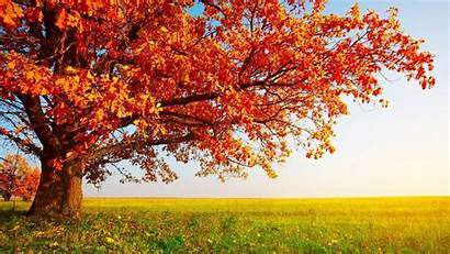 Fall Tree Wallpapers Nature Autumn Summer Indian