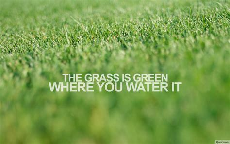 grass  green inspirational quotes quotivee