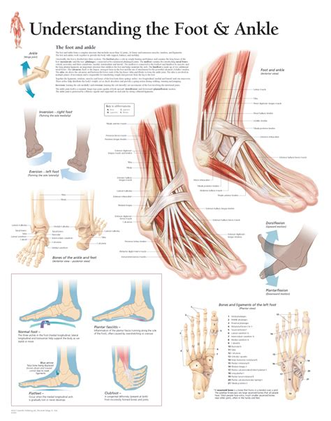 understanding  foot ankle scientific publishing