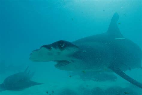 sneak peek  shark week   discovery  latest