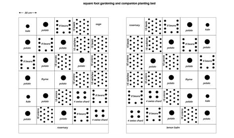 companion planting layout crops