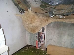 Wespen In Der Wohnung : wespen ~ Whattoseeinmadrid.com Haus und Dekorationen