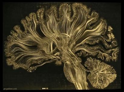 Consciousness Human Elucidating Self Reflected Through Dunn