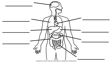 Simple Diagram Of Organ by Free Printable Blank Brain Free Clip Free