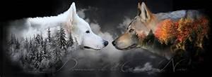 Bébé Loup Blanc : chien loup blanc kzh85 slabtownrib ~ Farleysfitness.com Idées de Décoration