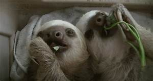 Sloth GIFs - Find & Share on GIPHY