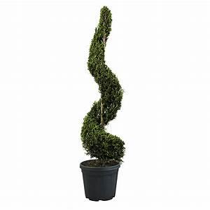 Cypres De Leyland Pas Cher : achat arbre plante et jardin pas cher e leclerc ~ Dode.kayakingforconservation.com Idées de Décoration