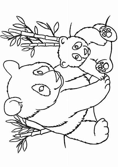 Panda Coloring Pages Printable Bear Sheets Animal