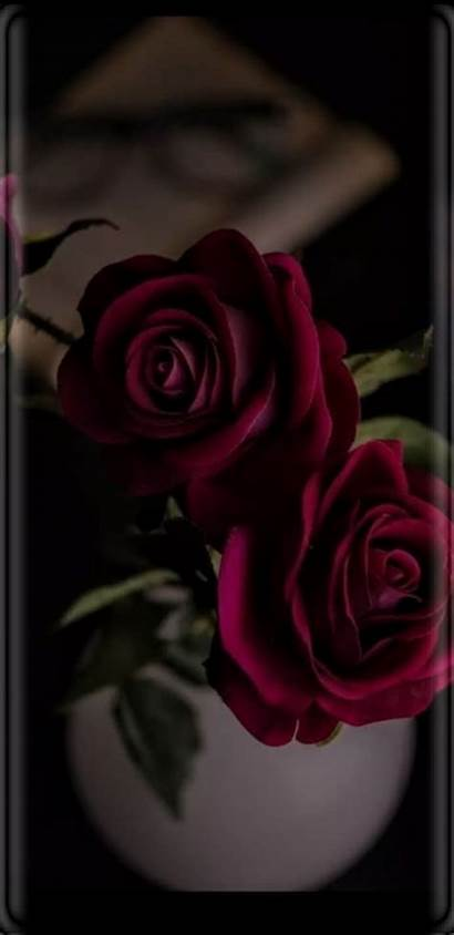 Coming Backgrounds Roses Iphone