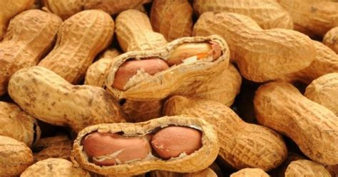 Eating Peanuts While Pregnant Can Cut Risk Of Child