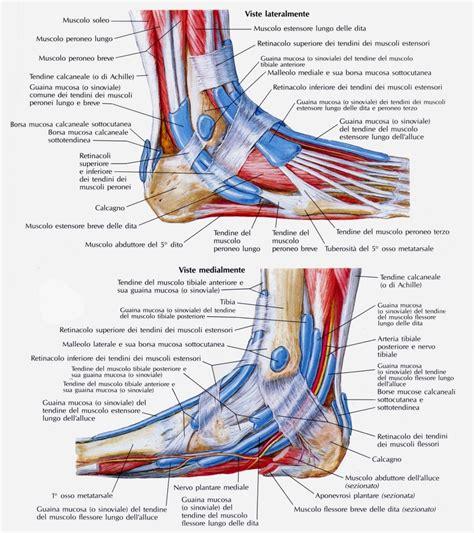 dolore al piede parte interna legamenti collo piede medicinapertutti it